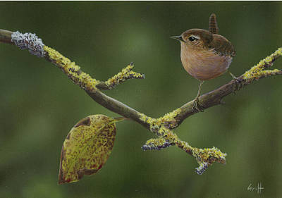 Wren Poster by Ian Griffiths