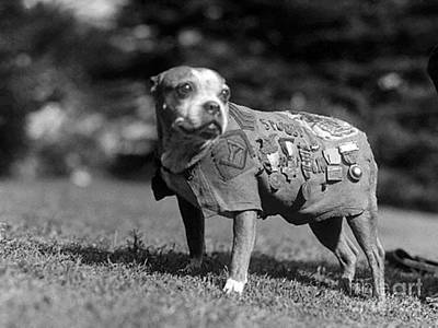 Wwi, Sergeant Stubby, American War Dog Poster by Science Source