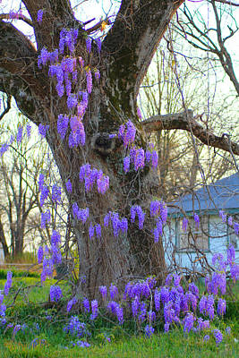 Wysteria Tree Poster