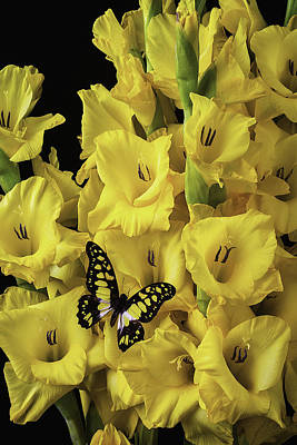 Yellow And Black Butterfly On Yellow Glads Poster by Garry Gay