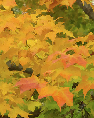 Poster featuring the photograph Yellow And Green Fall Leaves by Michael Flood