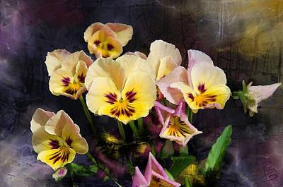 Yellow And Pink Pansies Poster