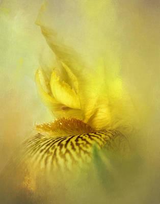 Yellow Bearded Iris Poster by David and Carol Kelly