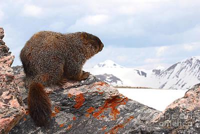 Yellow-bellied Marmot Enjoying The Mountain View Poster