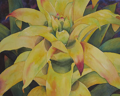 Yellow Bromeliad Poster by Judy Mercer