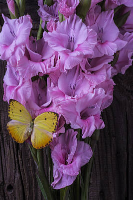 Yellow Butterfly On Pink Glads Poster by Garry Gay