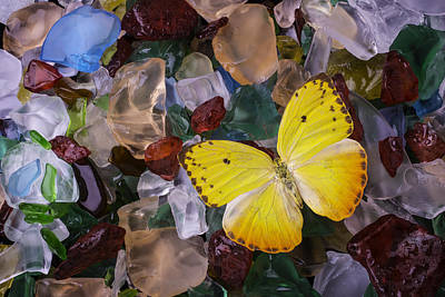Yellow Butterfly On Sea Glass Poster by Garry Gay