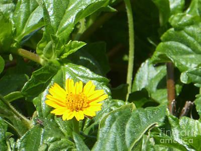 Yellow Caribbean Flower Poster
