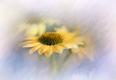 Yellow Coneflower II Poster by David and Carol Kelly