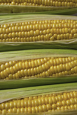 Yellow Corn Poster by Garry Gay
