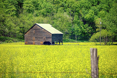 Yellow Field Rustic Shed Poster