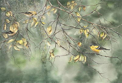 Yellow Finch Poster by Mary McCullah