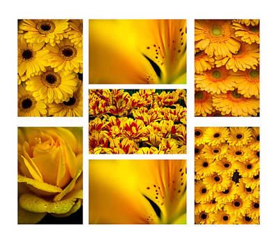 Yellow Flowers Collection. White. Polyptych Poster