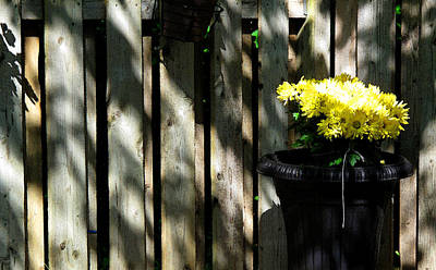 Yellow Flowers In A Black Flower Pot 2wc2 Poster
