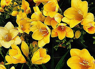Yellow Freesias Poster