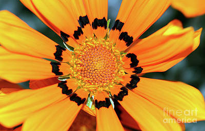 Poster featuring the photograph Yellow Gazania By Kaye Menner by Kaye Menner