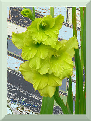 Yellow Gladiolas Poster