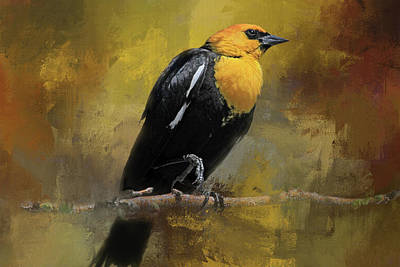 Yellow-headed Blackbird Poster by Donna Kennedy