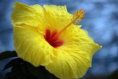 Poster featuring the photograph Yellow Hibiscus by Debbie Karnes