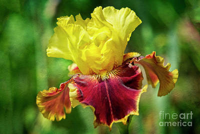 Poster featuring the photograph Yellow Iris by Craig Leaper