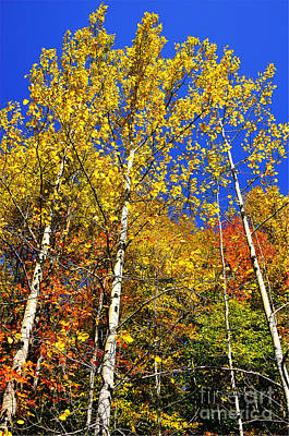 Yellow Leaves Blue Sky Poster