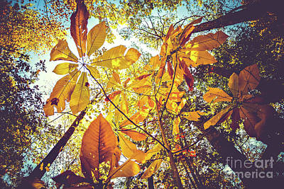 Yellow Leaves Of Fall Poster