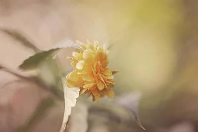 Yellow Love Poster by Cindy Grundsten