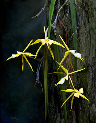 Poster featuring the digital art Yellow Orchid by Thanh Thuy Nguyen