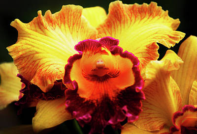 Poster featuring the photograph Yellow-purple Orchid by Anthony Jones