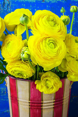 Yellow Ranunculus In Striped Can Poster by Garry Gay