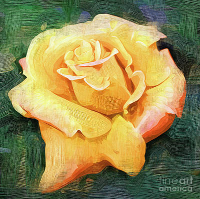Yellow Rose Bloom In Oil Poster by Kirt Tisdale
