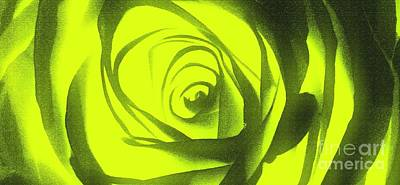 Yellow Rose Of Texas II Poster by Al Bourassa
