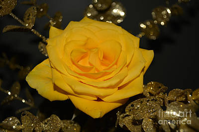 Yellow Rose Of Texas Poster by Reva Steenbergen