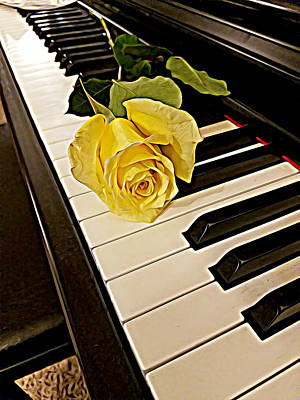 Yellow Rose On Piano Keys Poster