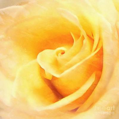 Poster featuring the photograph Yellow Rose - Sweet Whispers by Janine Riley