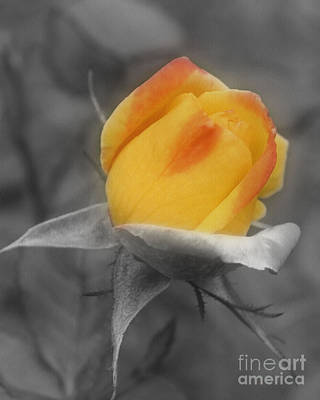 Poster featuring the photograph Yellow Rosebud Partial Color by Smilin Eyes  Treasures