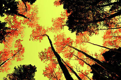 Poster featuring the photograph Yellow Sky, Burning Leaves by Kevin Munro