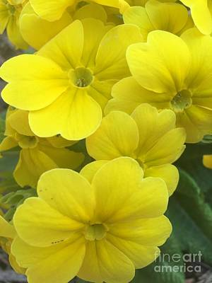 Yellow Spring Poster by Viktoriya Sirris