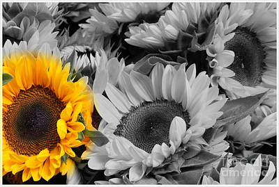 Yellow Sunflower On Black And White Poster
