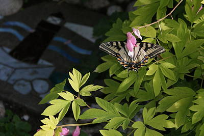Yellow Swallowtail Butterfly On A Bleeding Heart Bloom Poster by Holly Eads