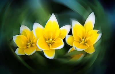 Yellow Trio Poster