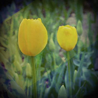 Yellow Tulip Art Poster