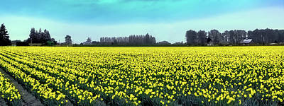 Yellow Tulip Fields Poster by David Patterson