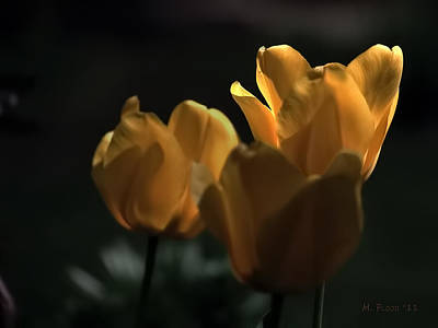 Poster featuring the photograph Yellow Tulip Spotlight by Michael Flood