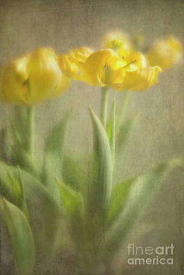 Poster featuring the photograph Yellow Tulips by Elena Nosyreva