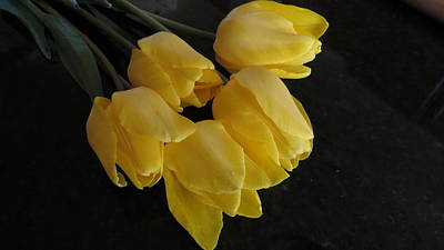 Yellow Tulips With A Dark Background Poster by Kay Novy