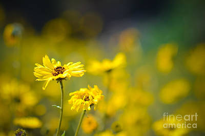 Poster featuring the photograph Yellow Wild Flowers by Kelly Wade