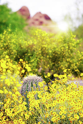 Yellow Wildflowers Cactus And Mountain In Arizona Poster by Susan Schmitz