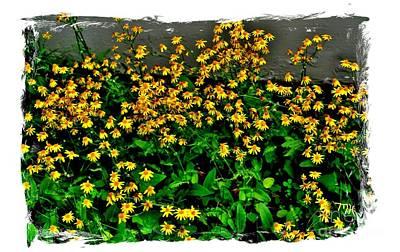 Yellow Wildflowers Poster by Marsha Heiken