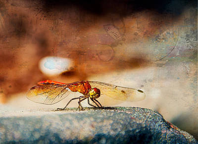 Yellow Winged Dragonfly Poster by Mary Koenig Godfrey